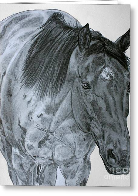 Quarter Horses Drawings Greeting Cards - Razzy Greeting Card by Lucka SR