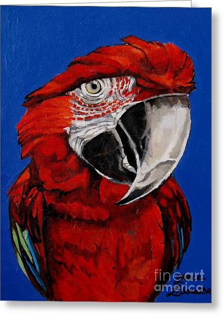 Colbalt Blue Greeting Cards - Razzy Red - Bird- Macaw Greeting Card by Grace Liberator