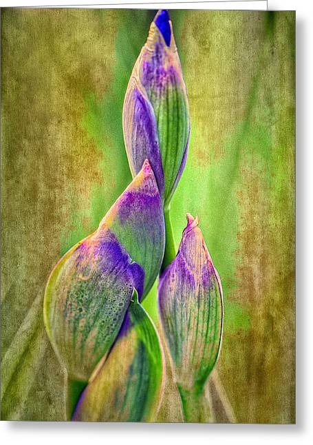 Reach Greeting Cards - Reach for Spring Greeting Card by Barbara Socor