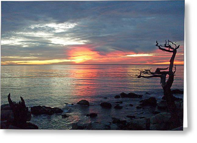 Ocean Vista Greeting Cards - Reach for the Sky 4 Greeting Card by Mike Podhorzer
