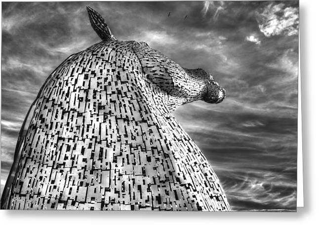 Kelpie Photographs Greeting Cards - Reach for the sky Greeting Card by Jim Sloan