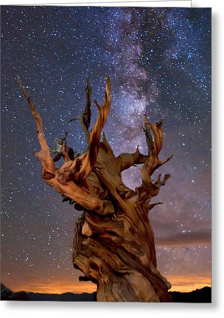 Eastern Sierra Greeting Cards - Reach for the Stars Greeting Card by Cat Connor