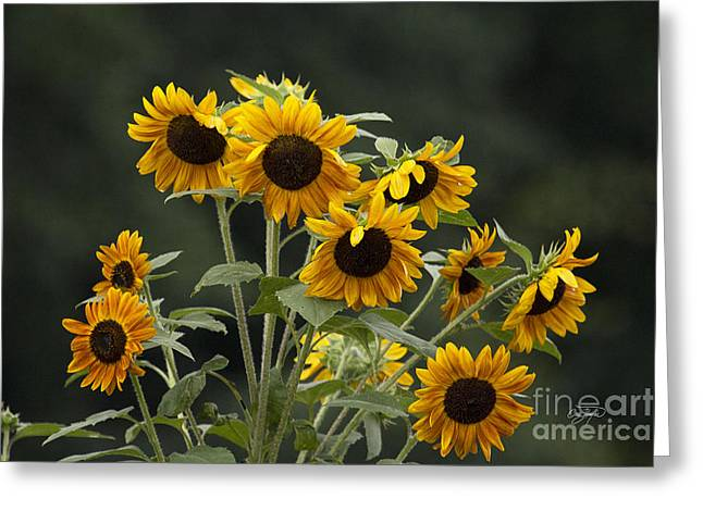 Amen Corner Greeting Cards - Reach for the Sun Greeting Card by Cris Hayes