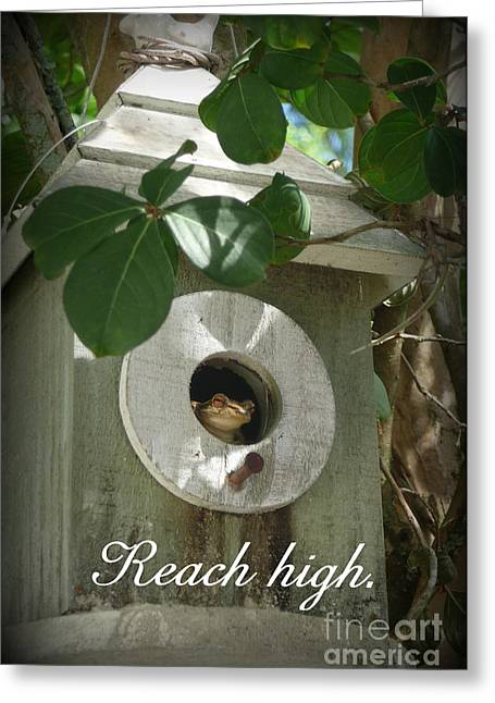Aim High Greeting Cards - Reach High Greeting Card by Valerie Reeves