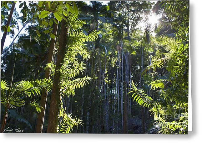 Kauri Pines Greeting Cards - Reach Greeting Card by Linda Lees
