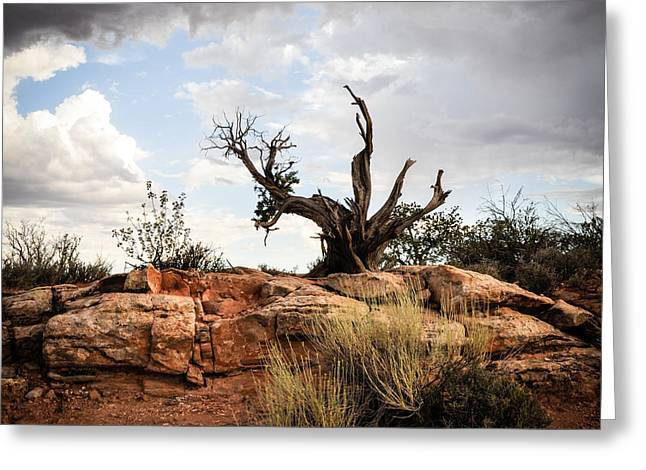 Arches National Park Pine Trees Greeting Cards - Reaching Greeting Card by Cheryl McClure