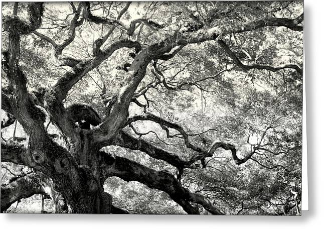 Big Trees Greeting Cards - REACHING for HEAVEN Greeting Card by Karen Wiles