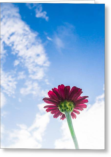 Pointed Petals Greeting Cards - Reaching for the Skies Greeting Card by Shelby  Young