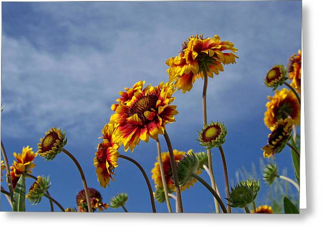 Reach Greeting Cards - Reaching for the Sky Greeting Card by Ernie Echols