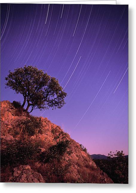 Polution Greeting Cards - Reaching for The Stars II Greeting Card by Boris Pophristov
