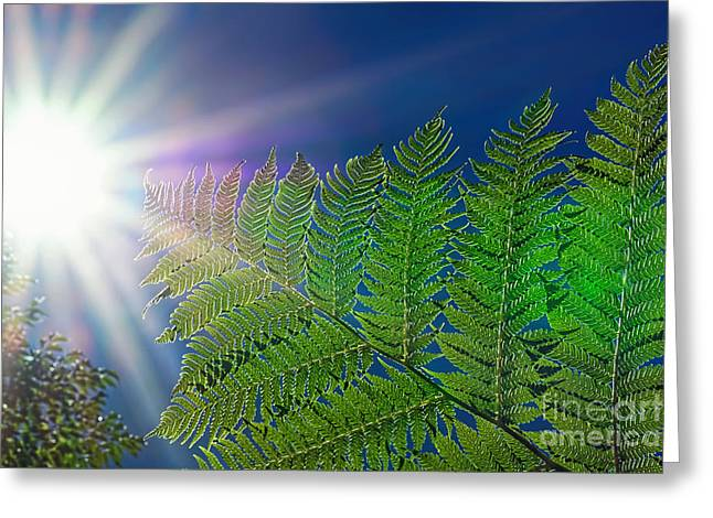 Reach Greeting Cards - Reaching for the Sun by Kaye Menner  Greeting Card by Kaye Menner