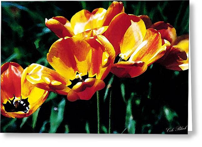 Spring Bulbs Drawings Greeting Cards - Reaching for the Sun Greeting Card by Cole Black