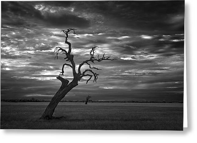 Grey Clouds Greeting Cards - Reaching Greeting Card by Leah Kennedy