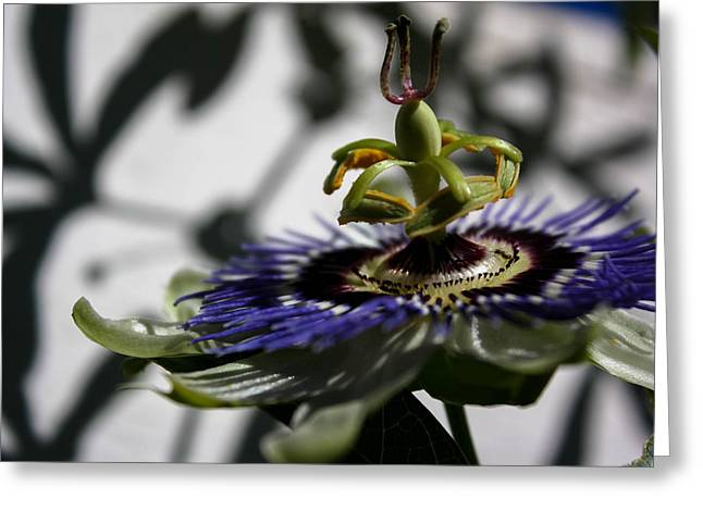 Passionflower Greeting Cards - Reaching Greeting Card by Natalie Hux
