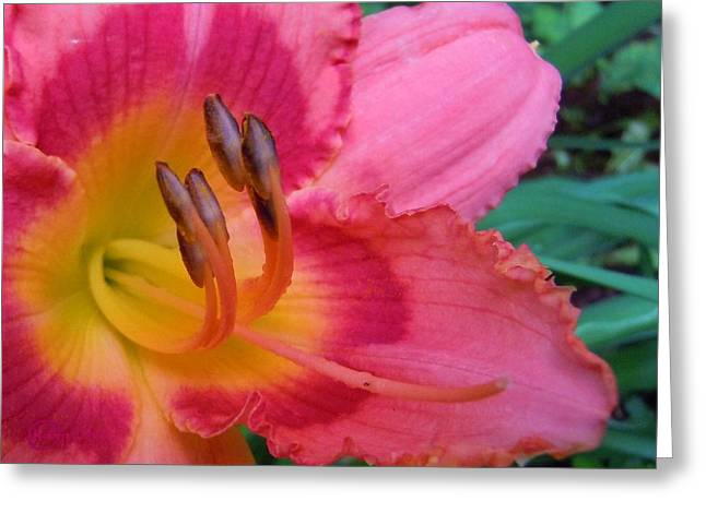 Reaching Out Greeting Card by Robert ONeil