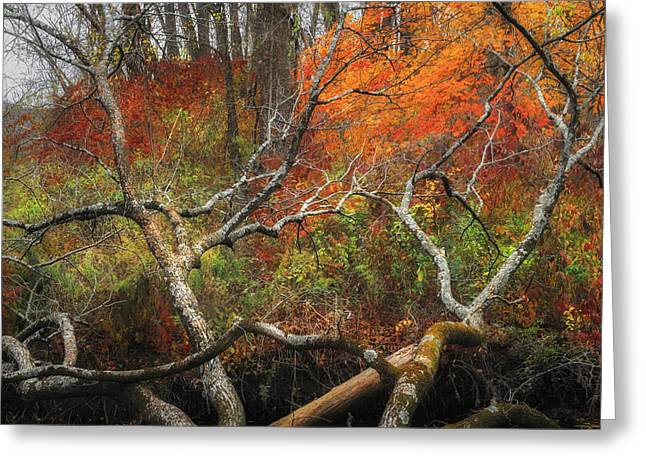 Connecticut Greeting Cards - Reaching Out Square Greeting Card by Bill  Wakeley