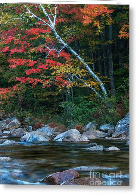 Scenic Drive Greeting Cards - Autumn Foliage along the Swift River Greeting Card by Thomas Schoeller