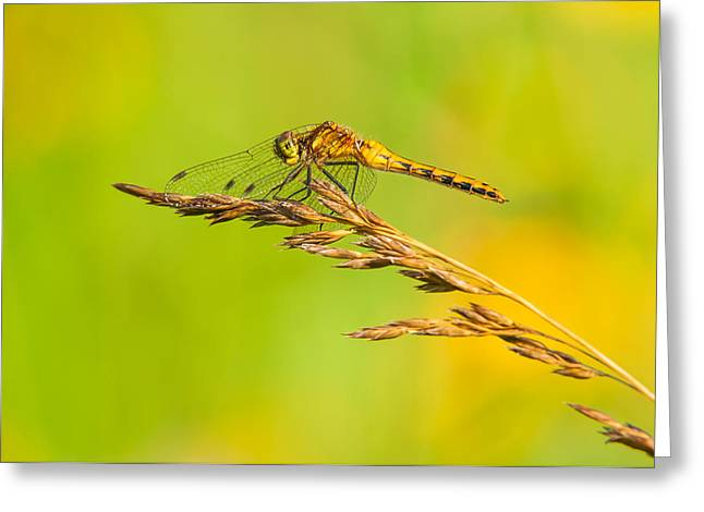 Meadowhawk Greeting Cards - Reaching Out Greeting Card by Willie McHale