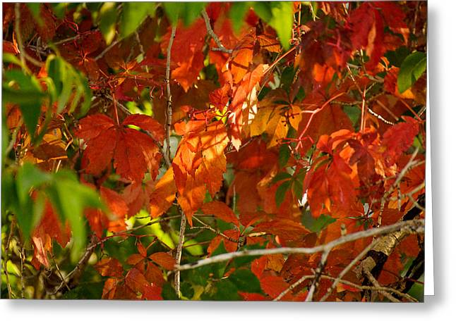 Red Fallen Leave Greeting Cards - Read leaves Greeting Card by Gloria Pasko