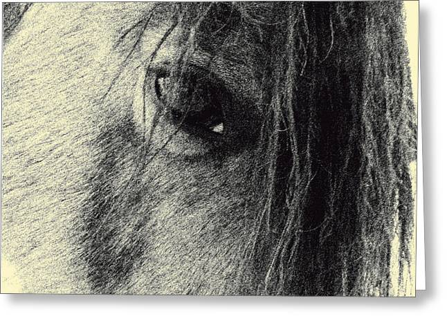 Paso Fino Stallion Greeting Cards - Read My Eyes Greeting Card by Patricia Keller