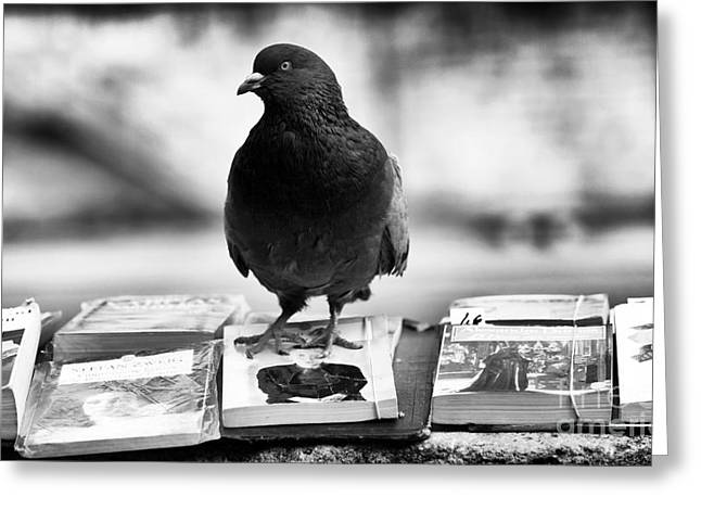Reading Images Greeting Cards - Reading is for the Birds Greeting Card by John Rizzuto