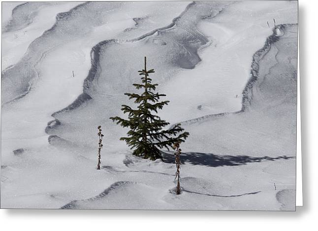 Snow Drifts Greeting Cards - Ready for Christmas Greeting Card by Ernie Echols