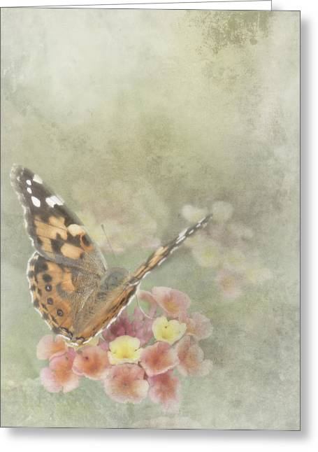 Painted Lady Greeting Cards - Ready for Flight Greeting Card by David and Carol Kelly