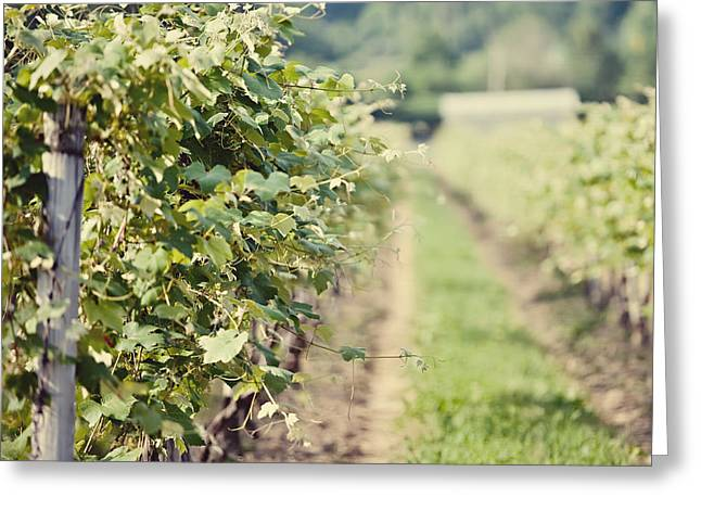 Ready for Harvest  Greeting Card by Lisa Russo