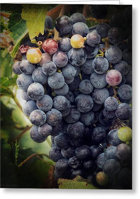 Lucinda Walter Greeting Cards - Ready for Harvest Greeting Card by Lucinda Walter