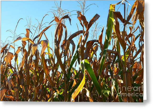 Ready For Harvest Greeting Card by Luther   Fine Art