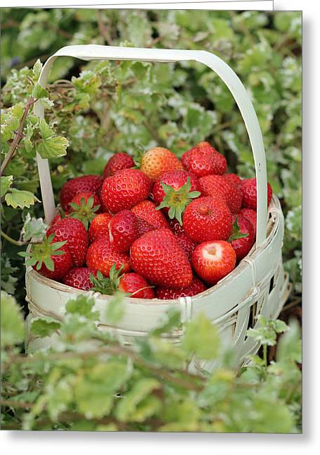 Baskets Of Strawberries Greeting Cards - Ready for Market Greeting Card by E Faithe Lester
