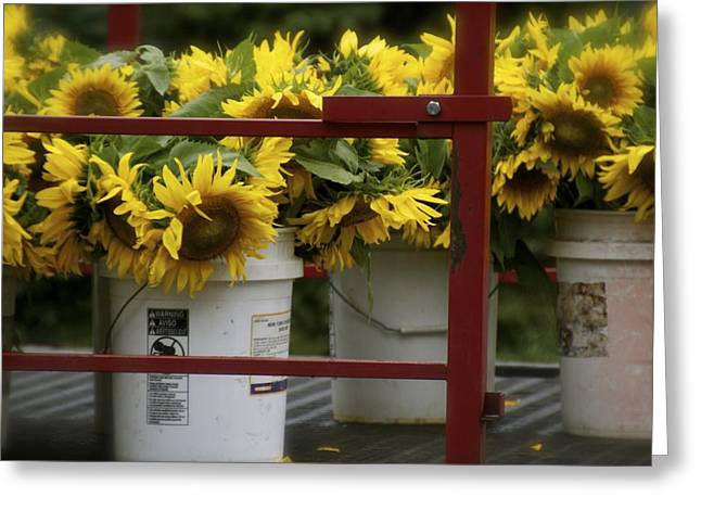Buttonwood Farm Greeting Cards - Ready for Sale Greeting Card by Dorothy Drobney