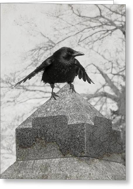 Gothicrow Greeting Cards - Ready To Fly Greeting Card by Gothicolors Donna Snyder