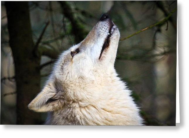 Preditor Greeting Cards - Ready to Howl Greeting Card by Steve McKinzie