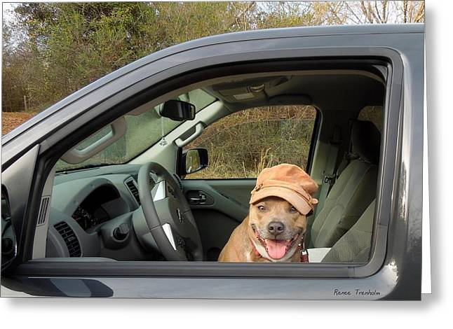 Apbt Greeting Cards - Ready To Ride Greeting Card by Renee Trenholm