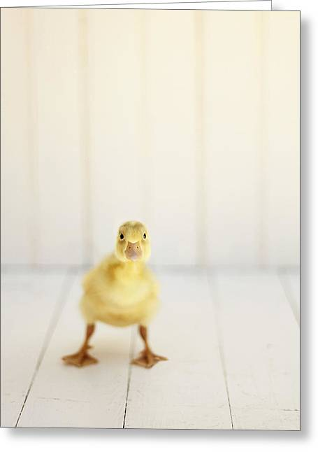 Ducklings Greeting Cards - Ready to Rumble Greeting Card by Amy Tyler