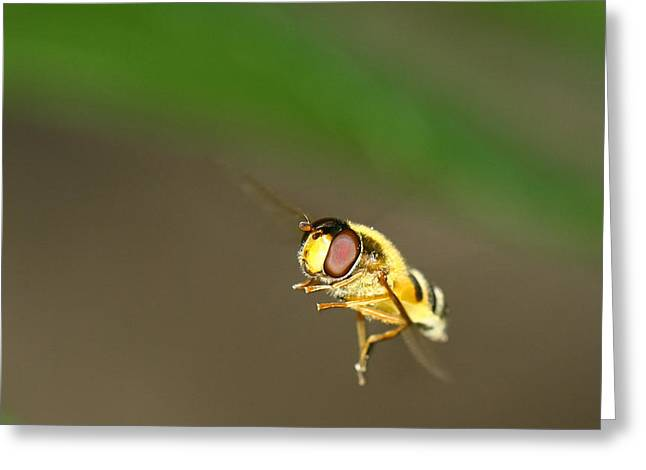 Take Over Greeting Cards - Ready to take off Roger Greeting Card by Charlie Photographer