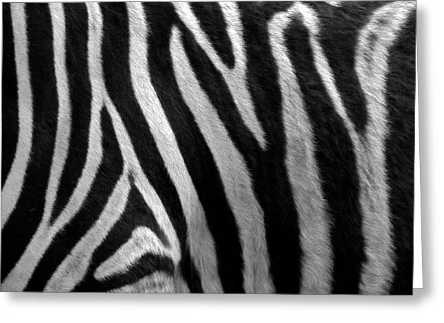 Zebra Picture Prints Greeting Cards - Real bw in our life Greeting Card by Narek Hovas