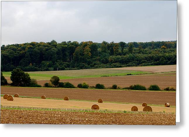 Pastureland Greeting Cards - Reaping Greeting Card by Mahmoud FineArt