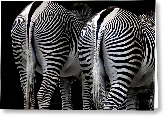 Beautiful Zebra Greeting Cards - Rear View Greeting Card by Brendan Reals