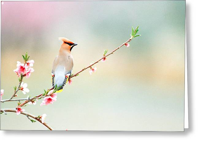 Close Focus Floral Greeting Cards - Rear View Of Bird Perching On Branch Greeting Card by Panoramic Images