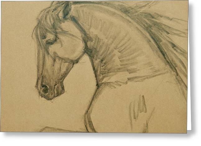 Horse Images Drawings Greeting Cards - Rearing Stallion Greeting Card by Jani Freimann