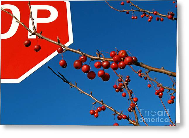Disobedient Greeting Cards - Rebellious Ornamental Crabapples in Autumn Greeting Card by Anna Lisa Yoder