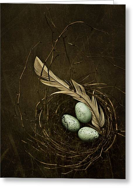 Nest Greeting Cards - Rebirth Greeting Card by Amy Weiss