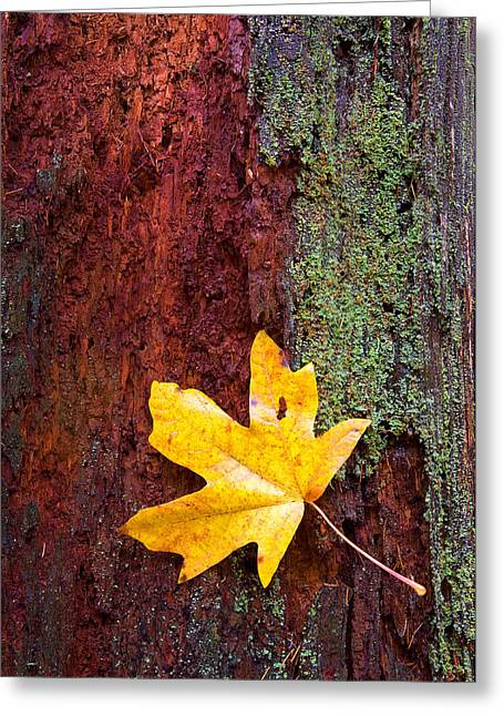 Fall Trees Greeting Cards - Reclamation Greeting Card by Mike  Dawson