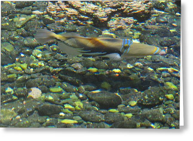 Water Triggerfish Print Greeting Cards - Rectangular Triggerfish Greeting Card by Karen Robert