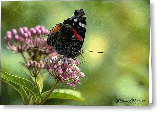 Swamp Drawings Greeting Cards - Red Admiral on Swamp Milkweed Greeting Card by Bruce Morrison