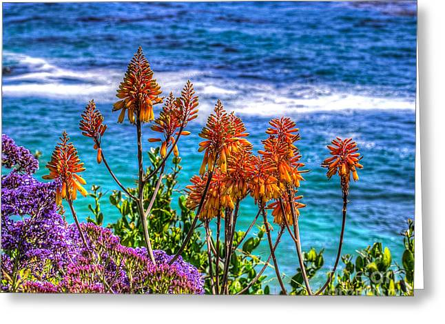Heisler Park Greeting Cards - Red Aloe by the Pacific Greeting Card by Jim Carrell