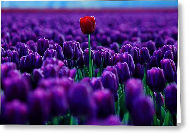 Individualism Greeting Cards - Red Amidst Purple Greeting Card by Benjamin Yeager