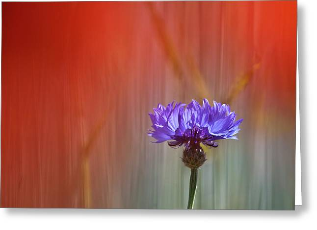 Red And Blue Greeting Card by Heiko Koehrer-Wagner